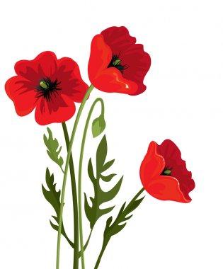 Three poppy