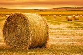 Széna bála Farm