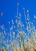 letní trávy