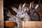 Fotografia giovani conigli saltar fuori un hutch