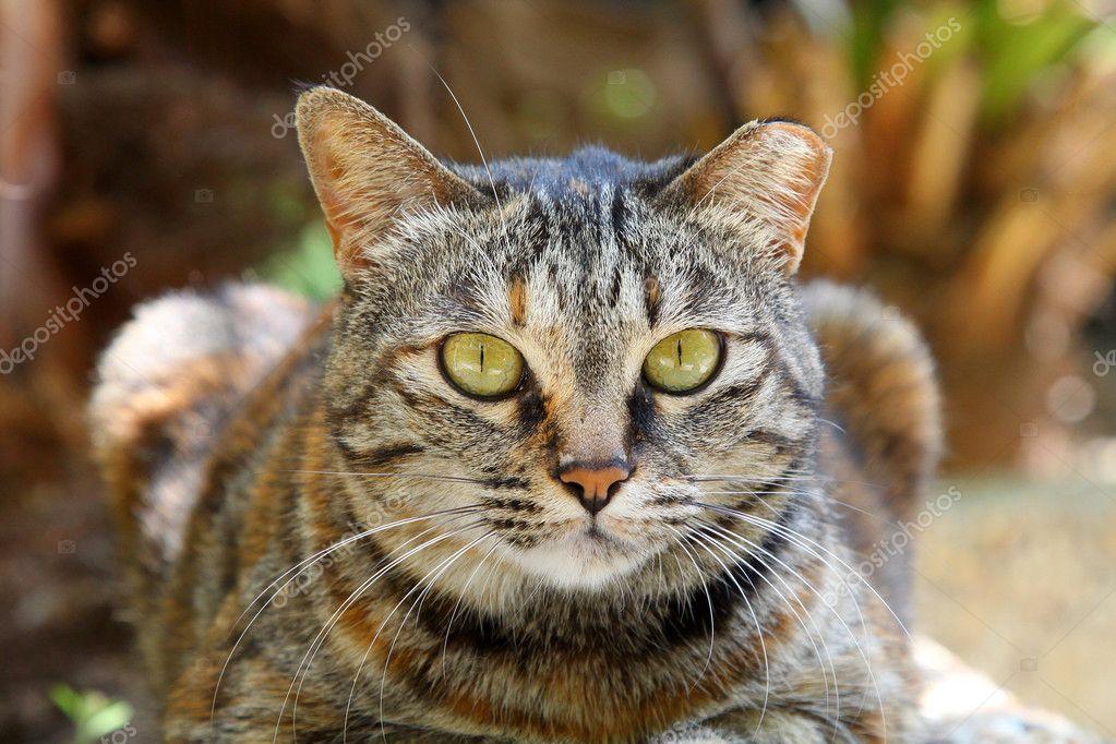 A cat with sharp eyesight