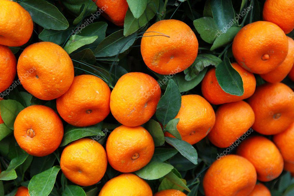 Mandarine orange Baum zum chinesischen Neujahr feiern — Stockfoto ...