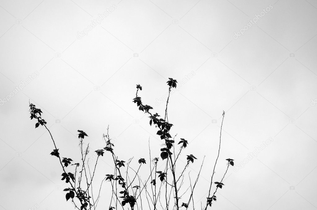 Grasses in black and white