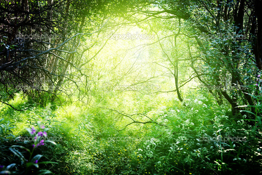 Sun in deep forest