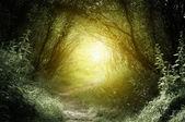 Fotografie cesta v hlubokých lesích