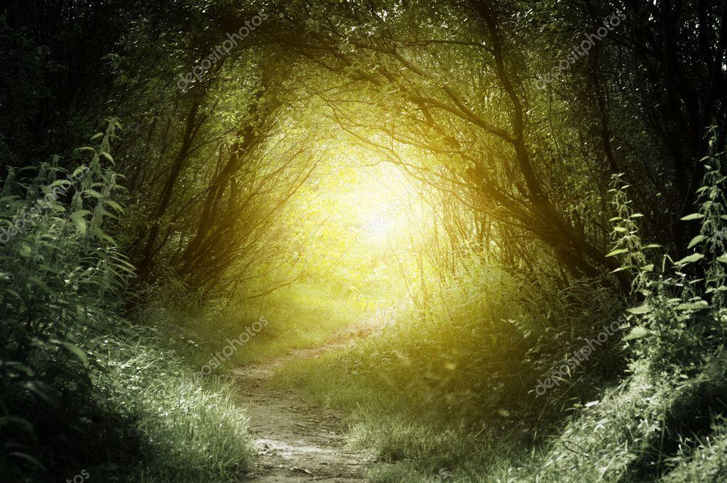 Фотообои Путь в глухом лесу