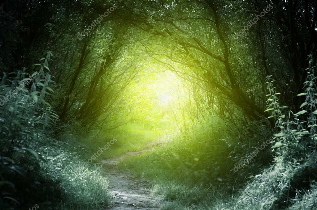 Фотообои Way in deep forest
