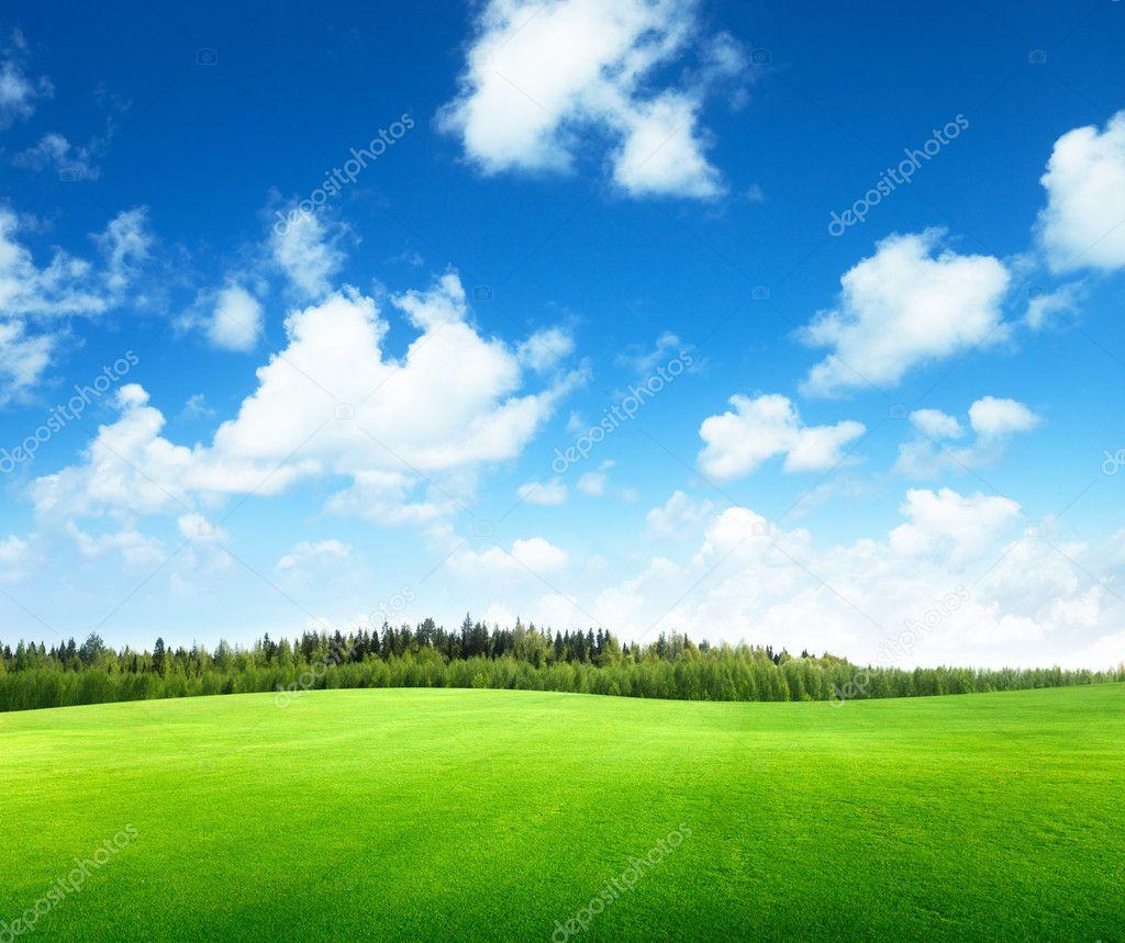Фотообои Field of grass and perfect sky