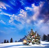 Fotografie Weihnachtsbaum mit Beleuchtung