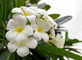 Photo Lan thom flower