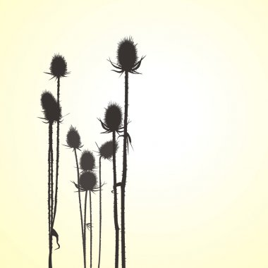 Thistle, vector objects