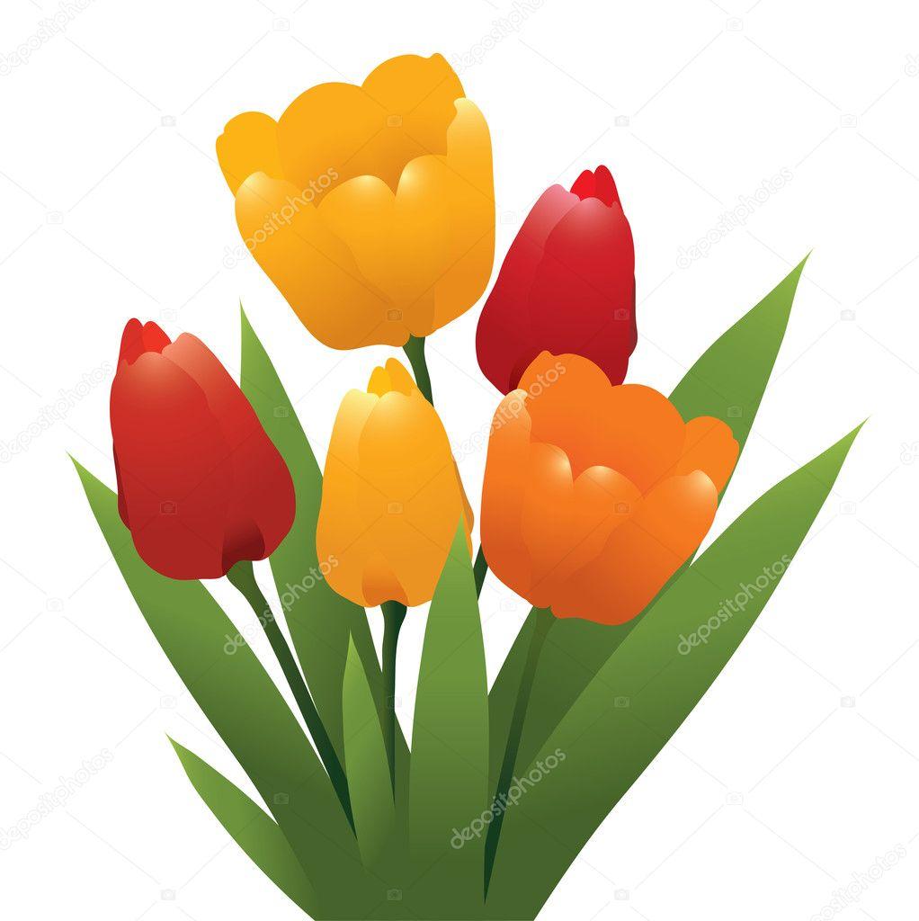 Gruppo vettoriale di tulipani vettoriali stock for Tulipani arancioni