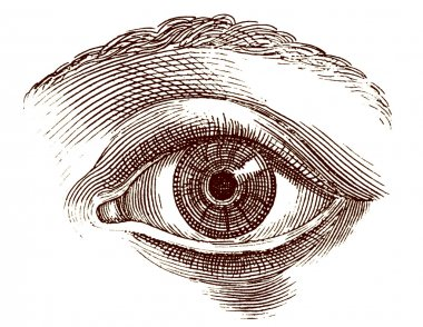 Human eye old engraving