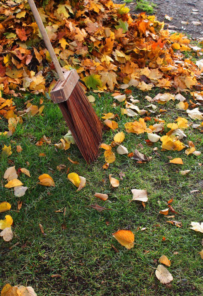 Autumn leaves and broom