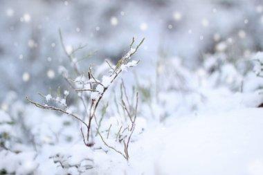 ilk kar izlenim