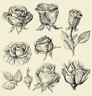 Roses doodles set