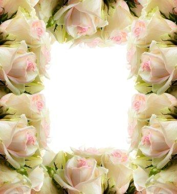 White roses frame border
