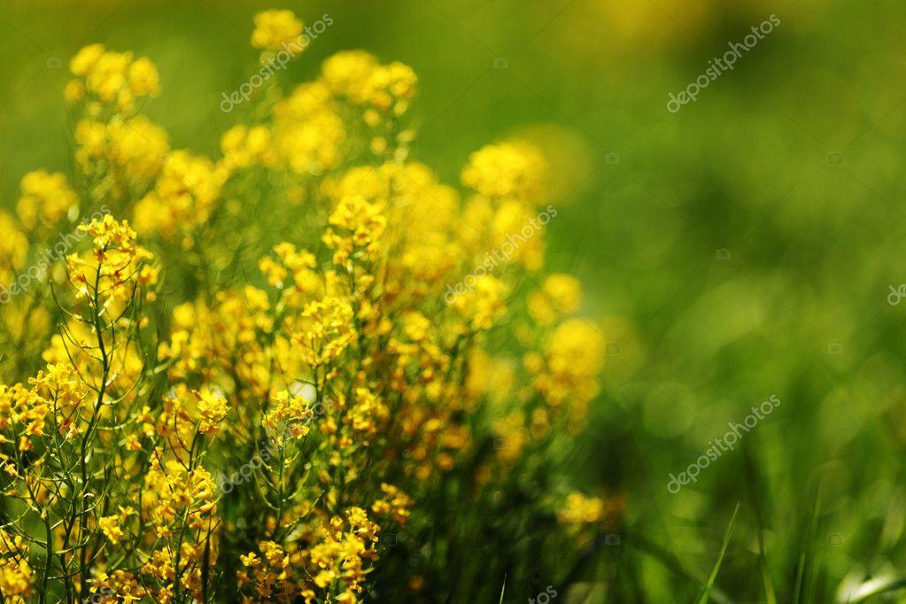 Fiori Primaverili Gialli.Fiori Primaverili Giallo Foto Stock C Yellow2j 8515928