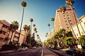 Palm ulicích beverly hills