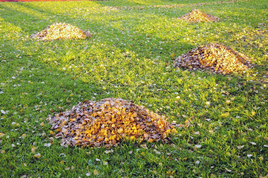 simon laisse tas dans la cour de l 39 automne nettoyage de jardin photographie sauletas 8215079. Black Bedroom Furniture Sets. Home Design Ideas