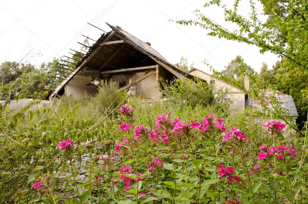 Abandoned village. Crumbling house garden residue