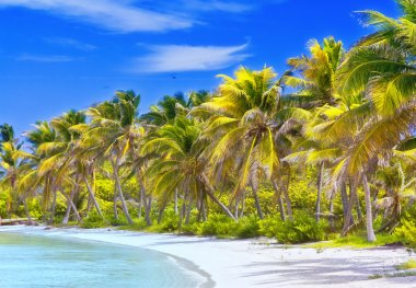 Beautiful tropical beach with palm trees postcard