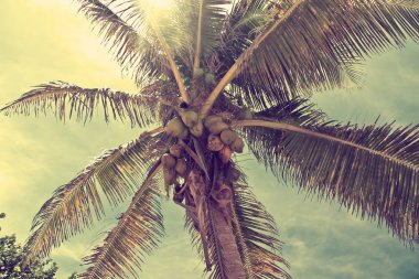 Beautiful tropical beach with palm trees retro