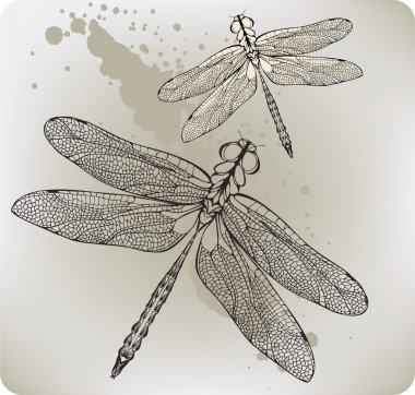 Flying dragonfly, hand-drawing. Vector illustration.