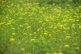 velké plochy divokých květů