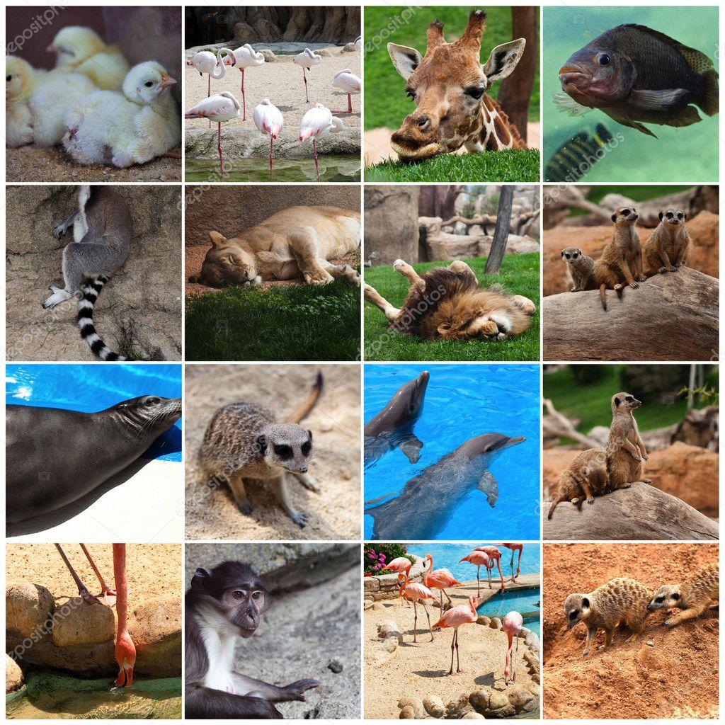 Collage of animals