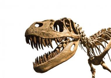 Esqueleto de tiranosaurio Rex