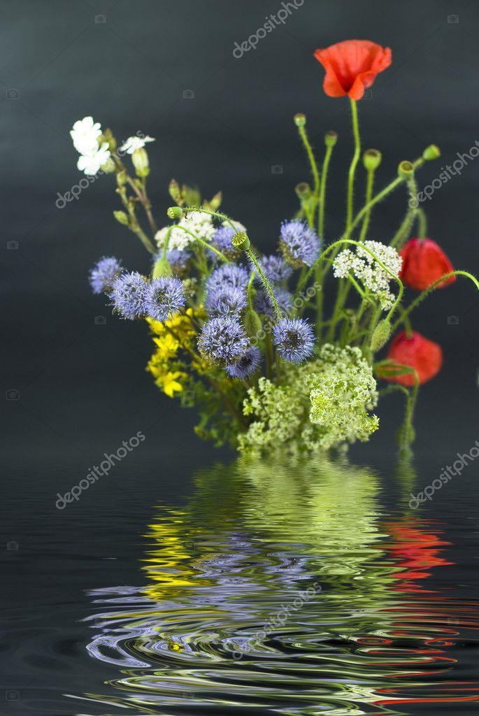 bouquet de diff rentes fleurs sauvages avec reflet dans l 39 eau sur un ba noir photographie. Black Bedroom Furniture Sets. Home Design Ideas