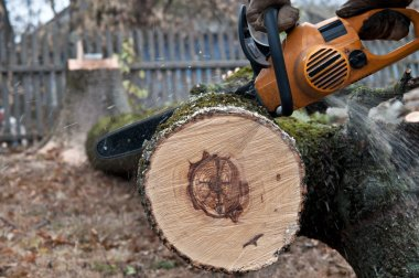 Man cuts tree with electric saw