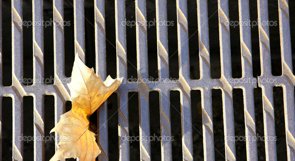Autumn. Leaf on grid