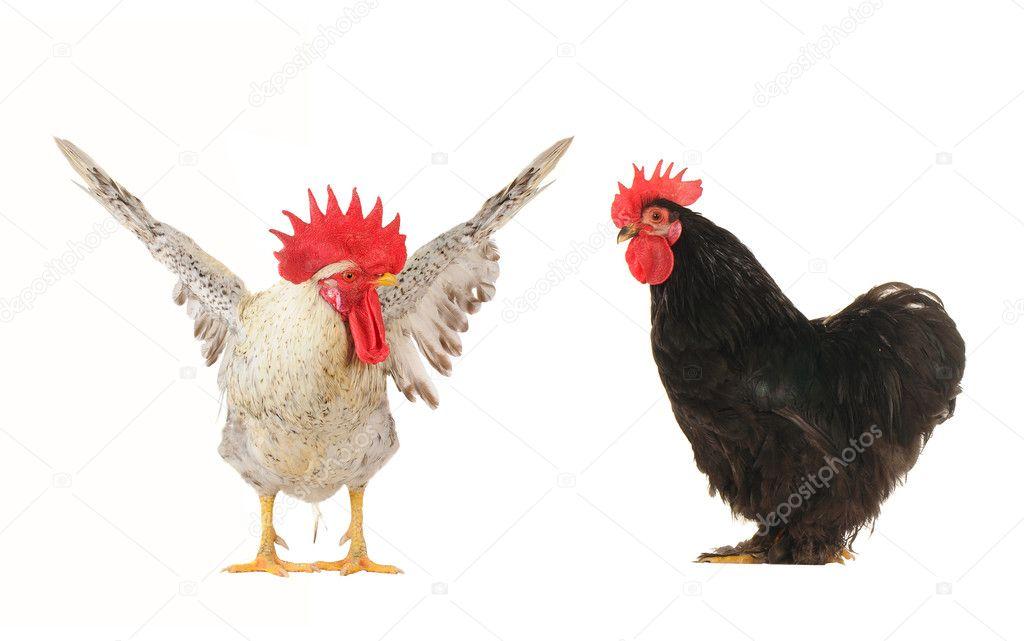 Курица запоет наркологической клиника киев