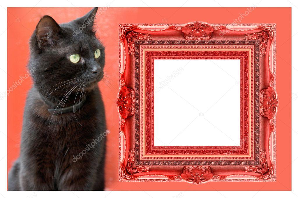 Katze Heraustreten aus Bilderrahmen — Stockfoto © bazil #9521405