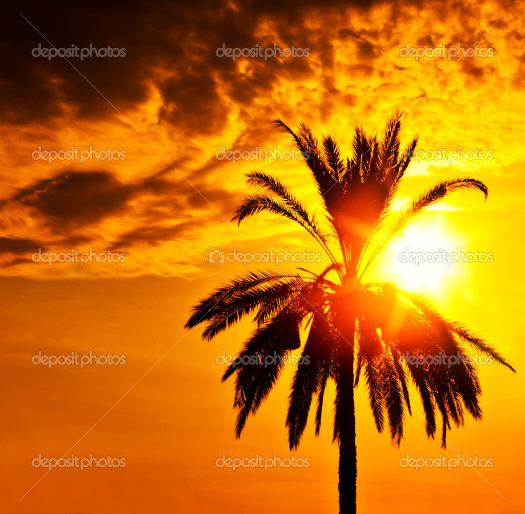 Palm tree silhouette over sunset