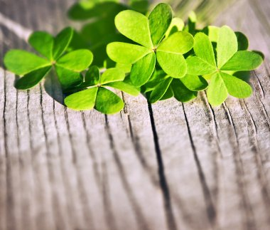 Fresh clover leaves over wooden background