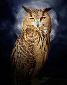 Bubo bubo gufo uccello notte luna piena