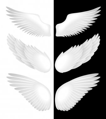 The wings of angels in white and black background. Vector illustration stock vector