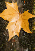 Photo Fallen autumn leaf