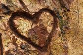 Fotografia cuore su albero