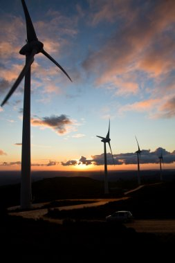 Eolic generators at sunset