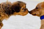 Fotografie domácí psi poznat jeden druhého