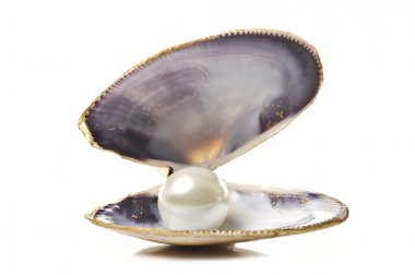 One white pearl in a sea shell on white background