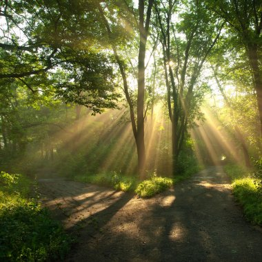 Sunny light