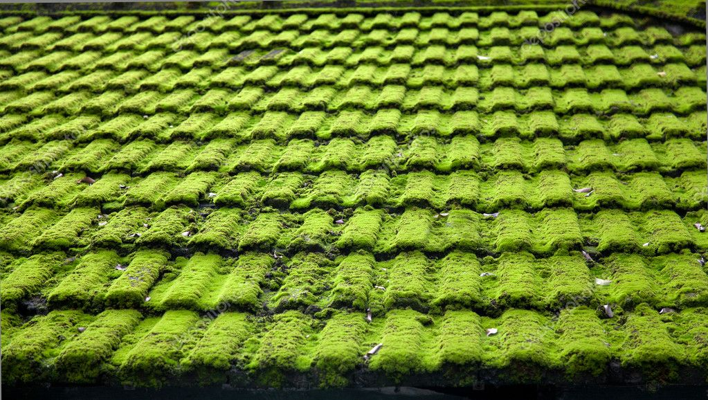 Moss wet weathered roof