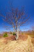 Osamělý strom po horské stezce