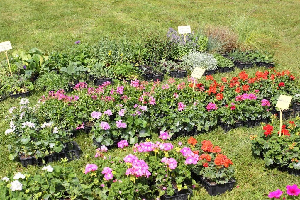 Peque as macetas de plantas para plantar en el jard n for Macetas pequenas