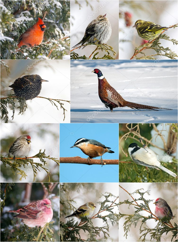 Winter birds collection.